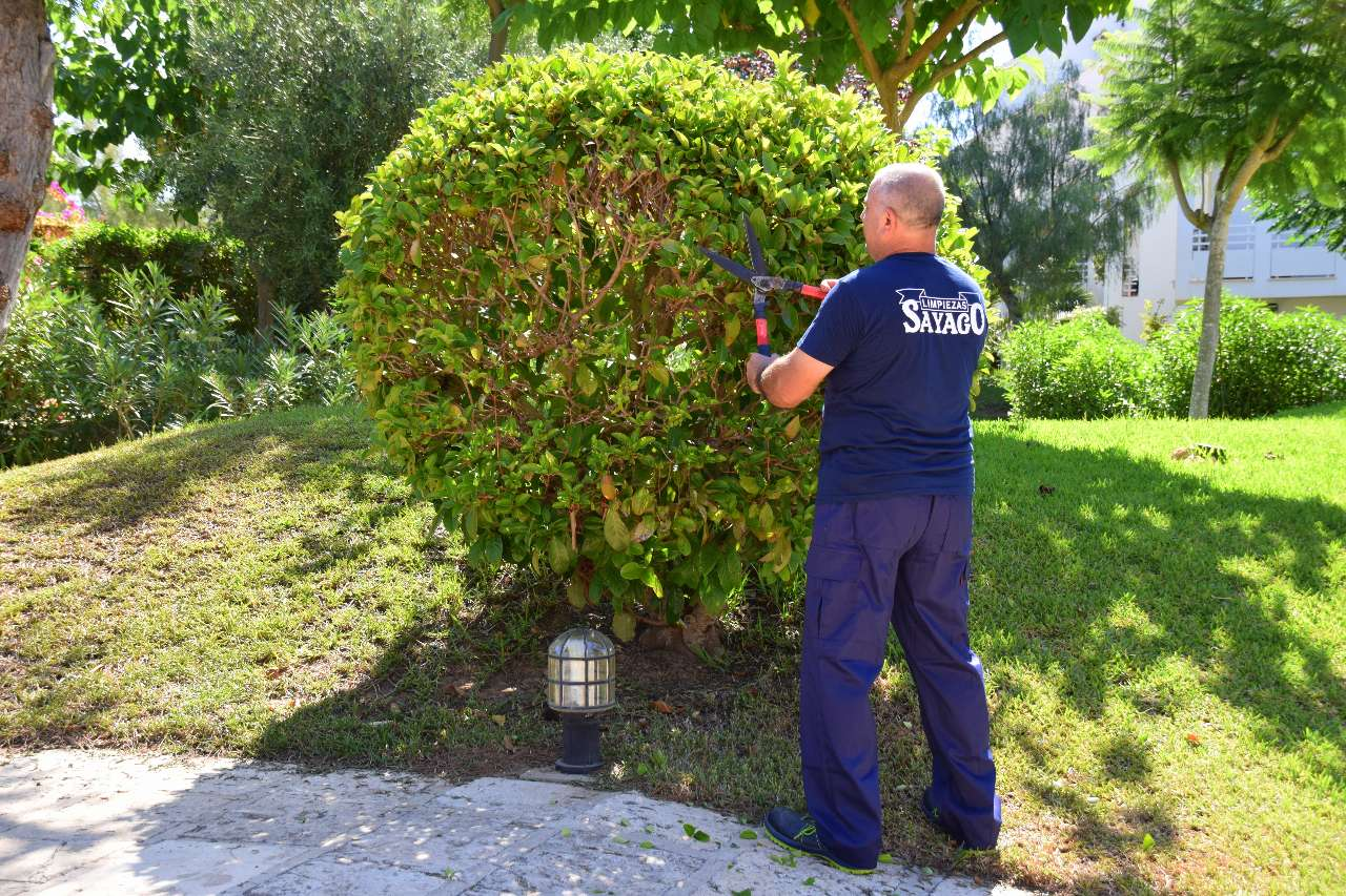 Garden maintenance limpiezas sayago
